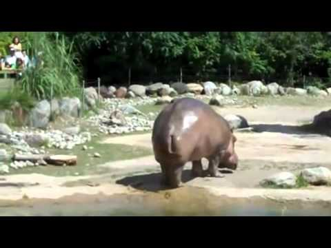 Hippo Lets It Go
