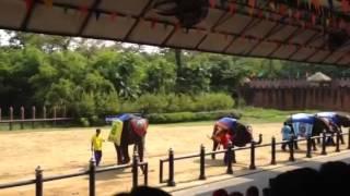 Bangkok Thailand October 2013 - Elephant Show 1