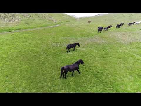 Εντυπωσιακό: Άγρια άλογα από ψηλά