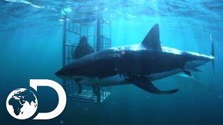Video The Mango Taniwha | Lair Of The Mega Shark MP3, 3GP, MP4, WEBM, AVI, FLV Juli 2018