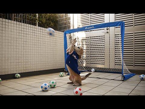 Purin the Beagle plays goalie