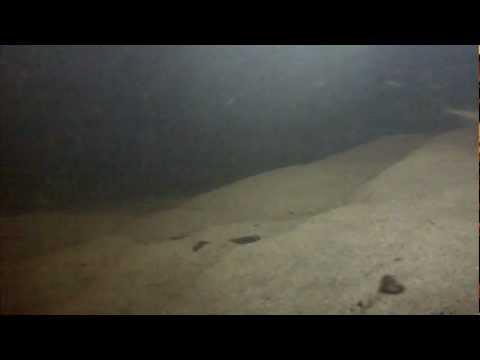 La pêche aux petits poissons des chenaux en Mauricie!