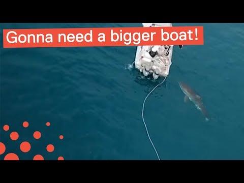 GREAT WHITE SHARK BITES BOAT