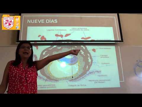 embriologia - UNIVERSIDAD DE SAN MARTÍN DE PORRES FACULTAD DE MEDICINA HUMANA FILIAL NORTE EMBRIOLOGIA - Diapositivas: http://goo.gl/2MFrAF.