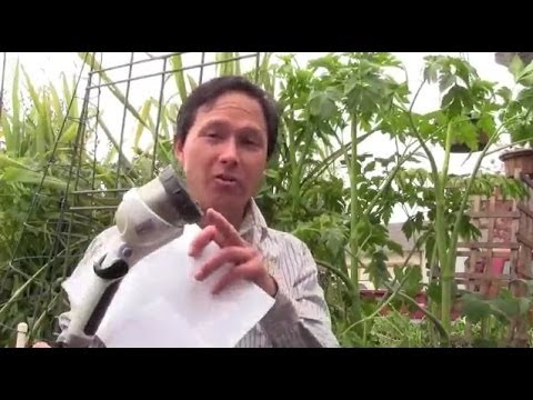 How to Create the Best Soil For Planting a Fruit Tree & More Gardening Q&A