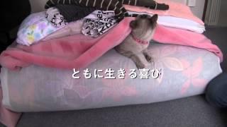 『犬と猫と人間と2 動物たちの大震災』予告編
