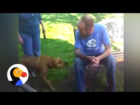 Dog Doesn't Recognize Owner After He Loses Weight
