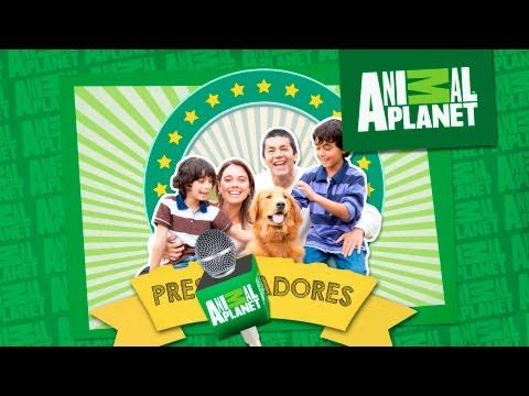 Concurso Dog Chow y Animal Planet
