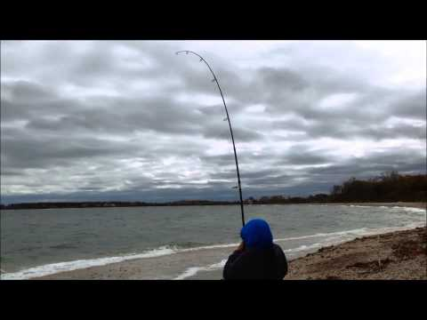 Beast From the East: Surf Fishing for Blackfish