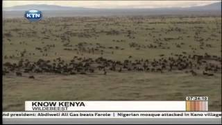 Know Kenya: The Wildbeasts