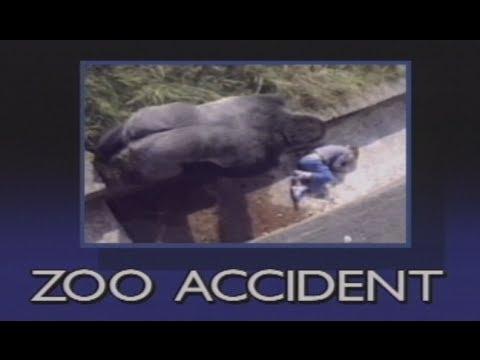 遊客看著黑猩猩靠近掉入園內的男孩時都心想「完了…」,沒想到結局卻讓人大感意外!