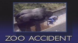 11-latek wpadł na wybieg goryli. Gdy wielki samiec podchodzi, ludzie wstrzymują oddech…