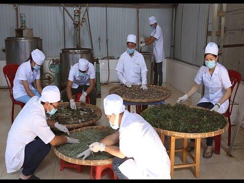 Phát triển cây dược liệu để xóa đói giảm nghèo