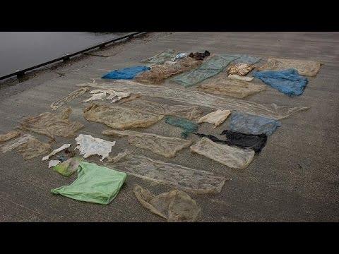 Νεκρή φάλαινα από πλαστικές σακούλες