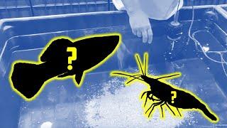 BEST Indoor Pond Lighting for $250? [Fish Room Vlog] by Aquarium Co-Op