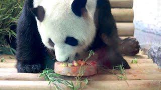 Und schon wieder ein Panda-Geburtstag im Berliner Zoo. Nachdem vor wenigen Tagen die Bärin Meng Meng gefeiert wurde, begeht nunmehr ihr Partner Jiao Qing (Dschiao Tsching) seinen Jahrestag.