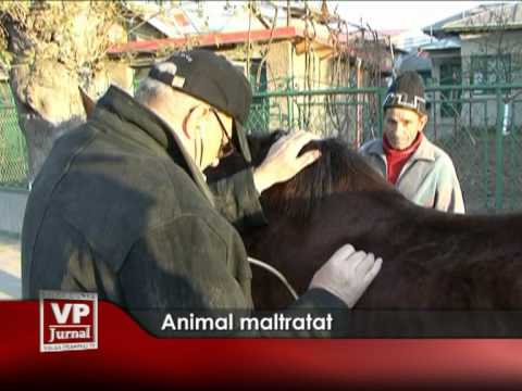 Animal maltratat