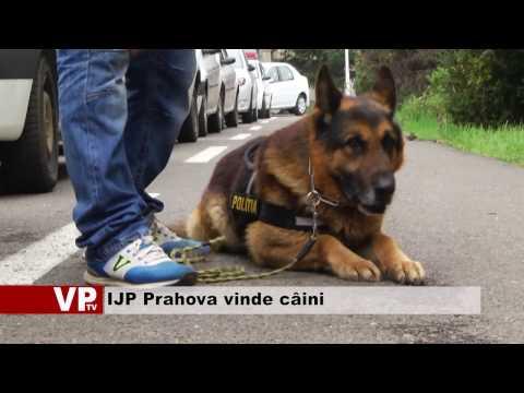 IJP Prahova vinde câini