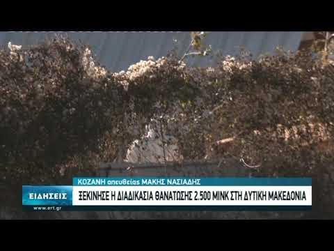 Θανατώνονται τα μινκ στην Κοζάνη | 14/11/2020 | ΕΡΤ