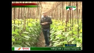 'Patajhara' disease is a major problem for farmers in the winter. Every year, millions of farmers are counting losses for this.Many farmers are getting good growth in Rajshahi from magic growth technology. Below, a liquid fertilizer that has been released in the winter betel leaf diseases.Arif Khan, joint director of the department of Rajshahi BADC (seed bipanan) inventor of the liquid fertilizer. Growth in the use of experimental crops in the liquid magic growth to the success of the betel leaf drop, he has been successful in controlling pests.In addition to fulfilling the demand for fertilizers, liquid fertilizers, crop diseases and pest suppressing the functionality of the officials said.