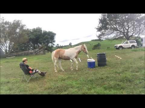 Pincér, a lovamat!