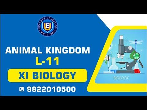 XI BIOLOGY ANIMAL KINGDOM  L11