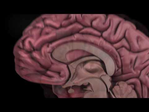 jonah lehrer proust was a neuroscientist pdf