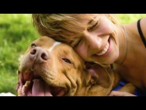 4 incredibili storie di cani fedeli fino alla morte