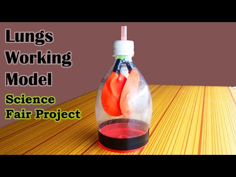 Awesome Lungs Working Model, Science Models and Science Fair Projects for 7th Grade and 8th grade