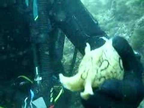 incredibili immagini di una maiale marino