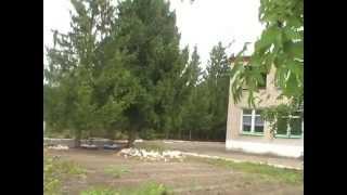 МБОУ ООШ с. Большой Мичкас филиал ШКОЛЫ №2