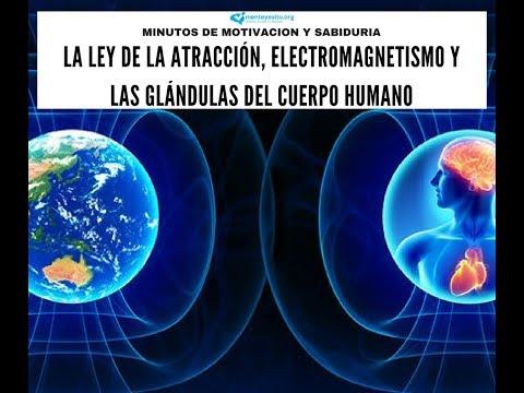 La Ley De La Atracción, Electromagnetismo Y Las Glándulas Del Cuerpo Humano