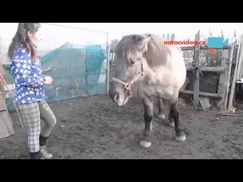 Práce a hraní s koněm
