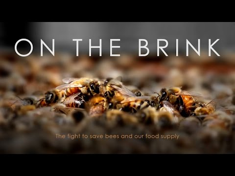 On The Brink: The fight to save bees and our food supply