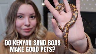 Do Kenyan Sand Boas Make Good Pet? by Emma Lynne Sampson