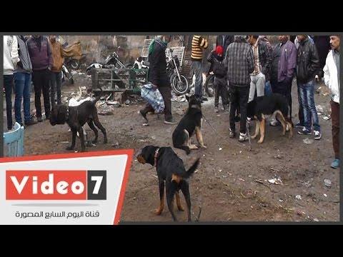 بالفيديو   الأمطار والبرد القارص يصيبان «سوق الجمعة» بالشلل لتام