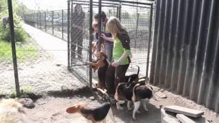 Laboratorium-Beagles krijgen beter leven.