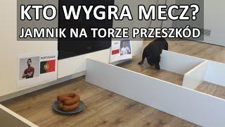 POLSKA – PORTUGALIA: kto wygra mecz? Jamnik wybiera