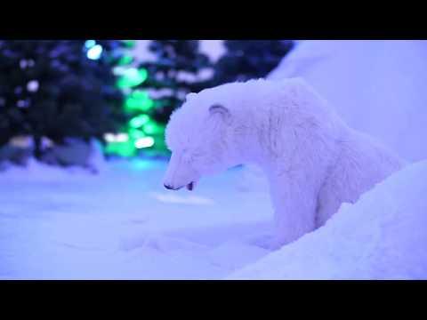 L'aventure au Pôle Nord