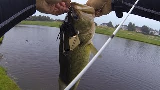 Crushing HAWGS on Buzzbaits at a Golf Course Pond