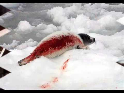 Animales en Peligro de Extinción y Maltrato (Video)