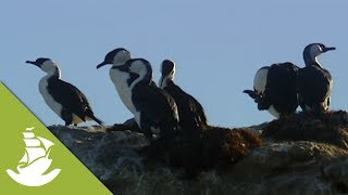 Seabirds play a gigantic role in the survival of fish populations, since they fertilize the water with their nitrogen rich excrement. SUBSCRIBE and discover shocking scenes and the most amazing videos: http://goo.gl/fC5pjCFollow us in:Facebook: https://www.facebook.com/NewAtlantisD...Twitter: https://twitter.com/NewAtlantisDocu