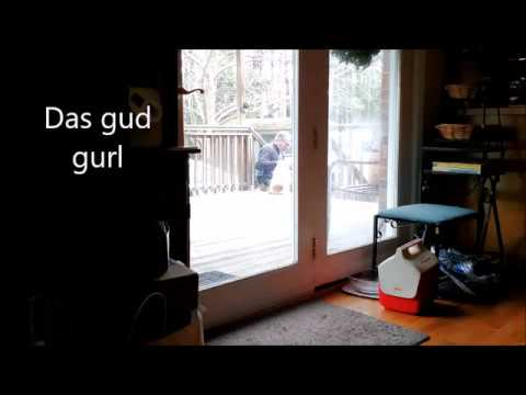Smart Dog Opens and Shuts Door Behind Her to Avoid