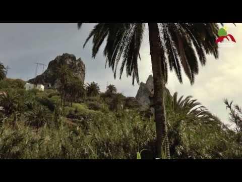 Alimentos de La Gomera: La miel de palma