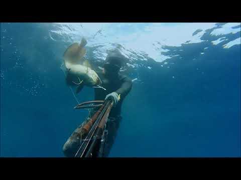 Spearfishing Croatia Mix 9