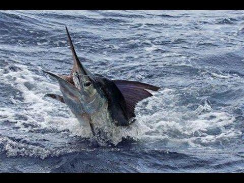 pesce spada incredibile!