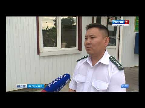 Управление Россельхознадзора проводит мониторинг карантинных вредителей с использованием феромонных ловушек на территории Республики Калмыкия