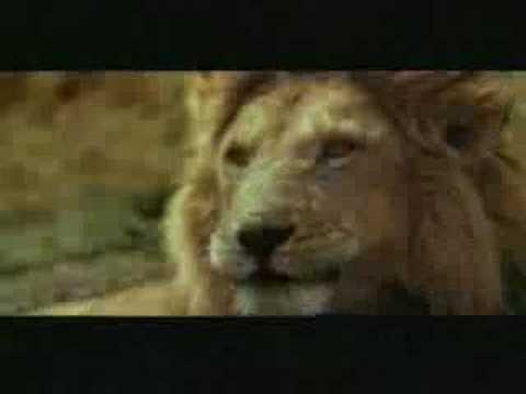 他真的沒有看到嗎?連獅子們都嚇到無言了…