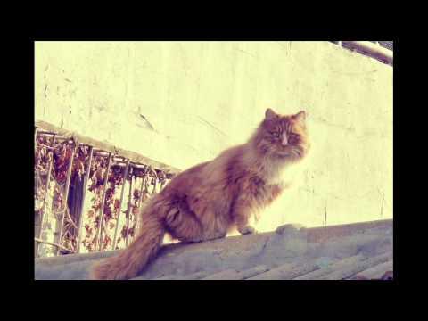 Secrets of Cat Behavior and Caring For Cats; Cat Health Benefits, Cat Symptom Checker