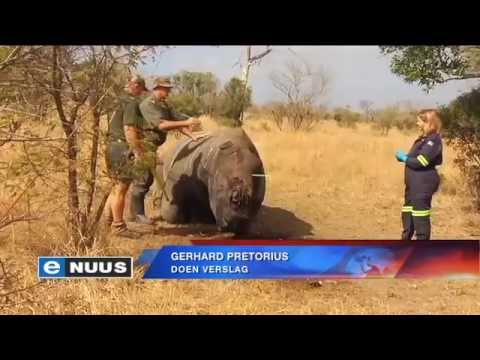 Meer Krugerwildtuin-renosters gaan hervestig word / More Kruger Park rhino to be relocated